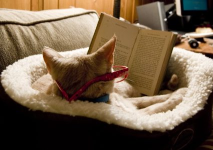 """Image credit: """"curl up and read_6"""" by Kate Whitley, licensed under CC BY-NC-ND 2.0"""