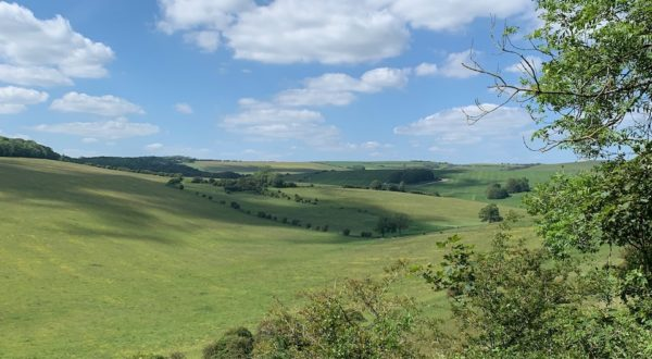 South Downs in June