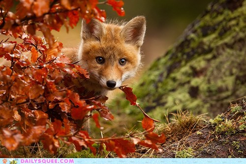 try a fall theme for firefox the den